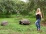 Giant Tortoises, Santa Cruz, Galapagos