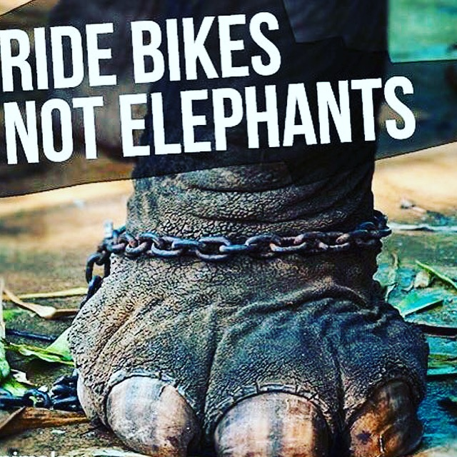 Mondulkiri Elephant & Wildlife Sanctuary in Cambodia is not a real Sanctuary
