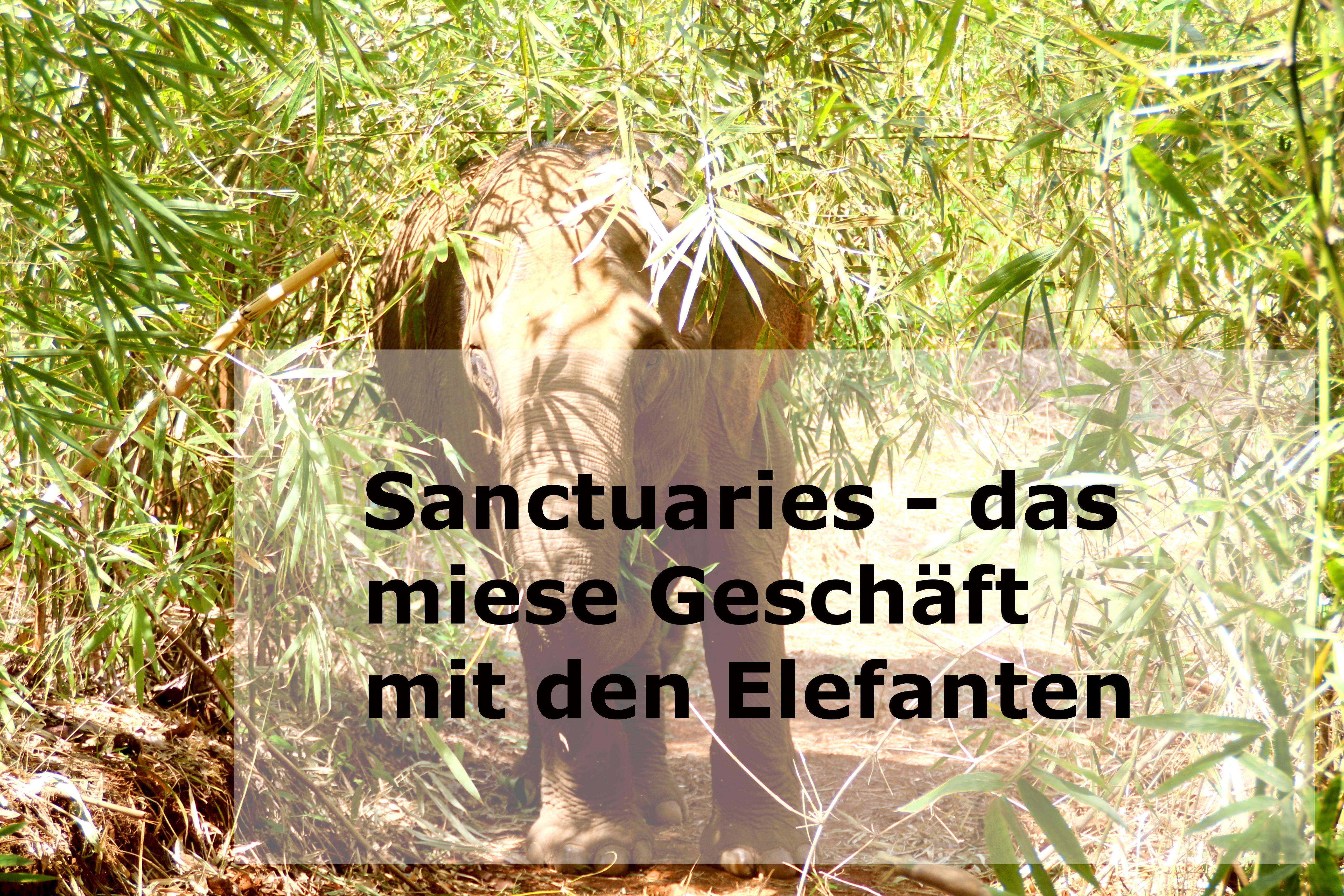 Sanctuaries – das miese Geschäft mit den Elefanten